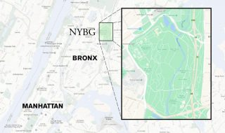 Map of NYBG in Relation to the Bronx