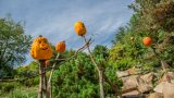 Pumpkin scarecrows stand amidst foliage and rock outcroppings.