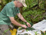 Image of scientist collecting herbarium samples.