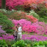 Photo of a couple in the Azalea Garden