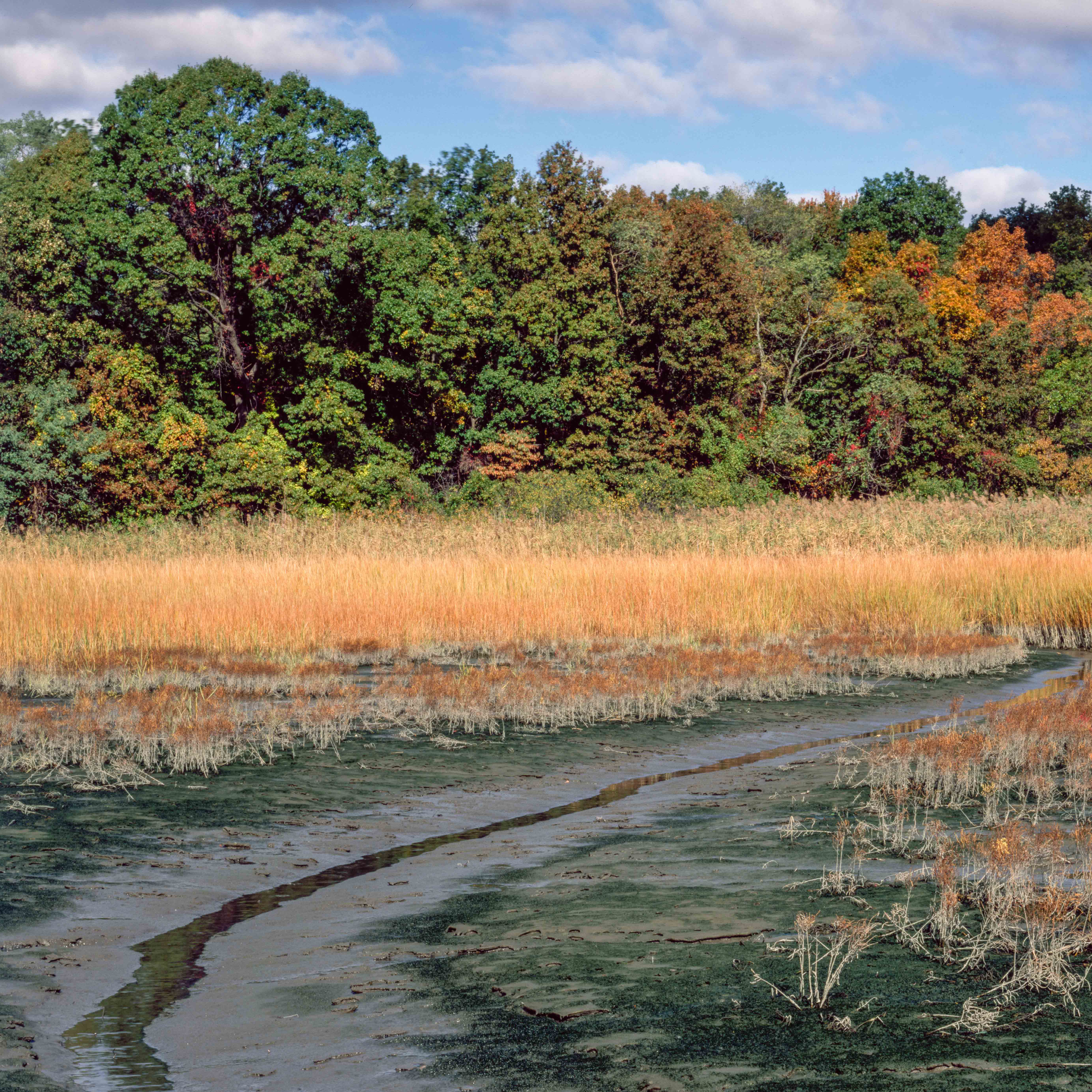 A lowland shot of a swamp marsh.