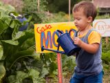 Family Garden - Summer