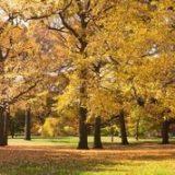 Arbor, Trees, Fall