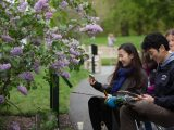 Lilac garden in the spring with people water color painting