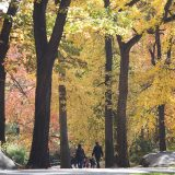 Family walking in the fall tall trees