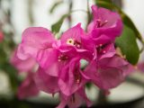 Conservatory - Summer