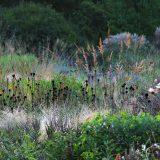 A subdued yet colorful landscape designed by Cassian Schmidt.