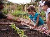 little girl getting seeds in the family garden