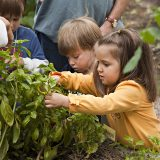 Photo of toddlers picking basil in the Family Garden, ECAG