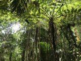 John Crow Mountains Jamaica