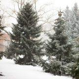 The Ross Conifer Arboretum in winter.
