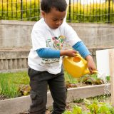 A young boy watering flowers.