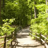Photo of the Thain Family Forest trails