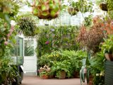 Conservatory - Winter