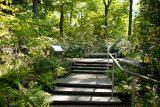 stairway in the native plant garden