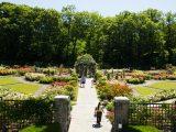 Rose Garden - Summer
