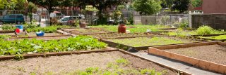 Plots for gardening in local Bronx Community Garden