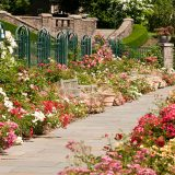 A view of the bloom-filled border of the Peggy Rockefeller Rose Garden.