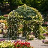 The pergola at the Peggy Rockefeller Rose Garden surrounded by blooming roses.