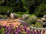 Couple standing in the Home Gardening Center with purple flowers