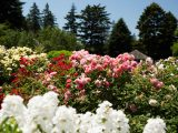 Home Gardening Center - Spring