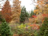 Trees and foliage in fall, children's garden, wetlands