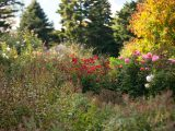 Home Gardening Center - Fall