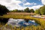 The Native Plant Garden in fall.