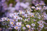 Native Plant Garden - Fall