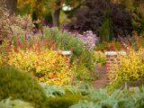 Perennial Garden - Fall