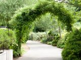 Archway covered in ferns in the Adventure Garden