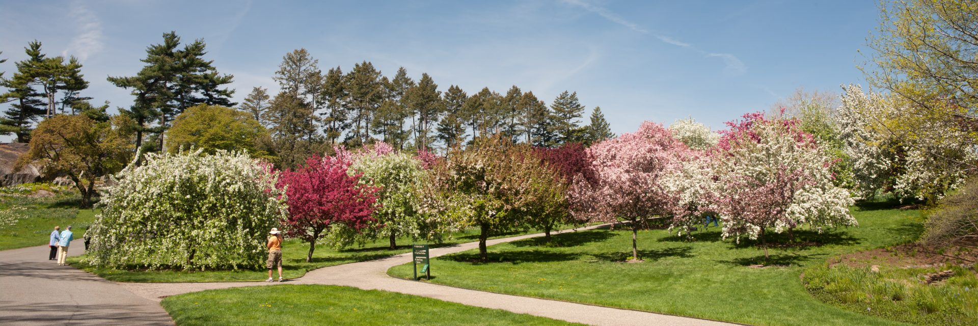 Photo of crab apple collection