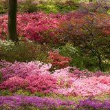 Azalea, Garden, Flowers, Summer