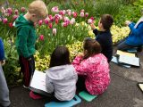 children studying pink tulips and yellow flowers