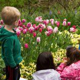 Children with tulips
