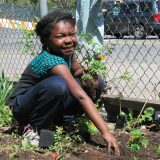 Young girl planting flowers in a community Garden.