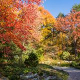 Orange and red leaves on the tress in the rock garden