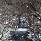 The Bronx River running through the Forest in winter.
