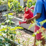 A child wearing a blue shirt and red shorts using a red watering can to tend to crops in planters