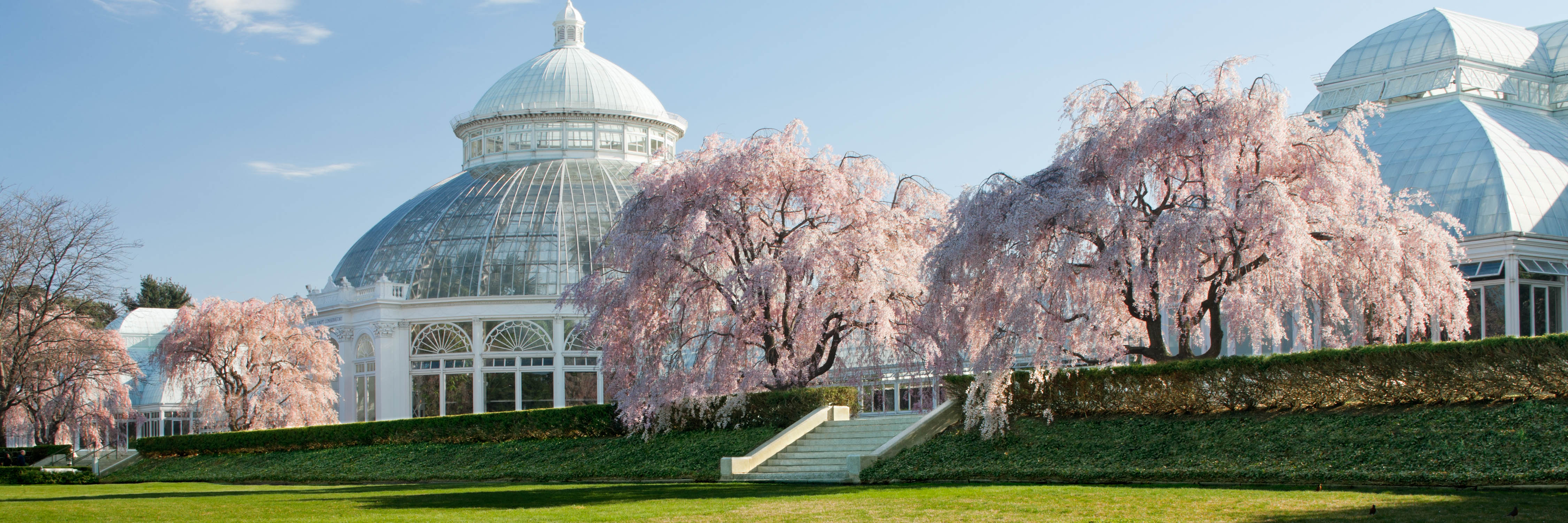 Conservatory with pink cherry trees in spring