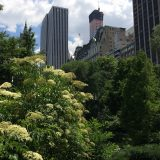 View of central park trees