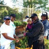Local residents working in community garden pulling leaves.