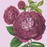 Photo: Rose Garden Dinner
