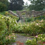 Rose Garden stairs in summer