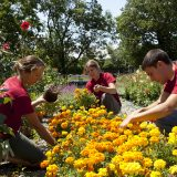 Photo of School of Professional Horticulture students in the garden, SOPH