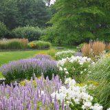 Photo of a garden designed by Hollander Design