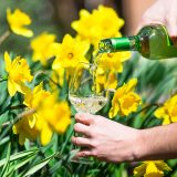Wine being poured into a glass in front of daffodils.