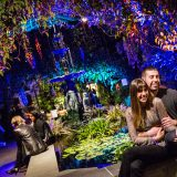 A young couple in the Aquatic Plants Gallery during an evening event.