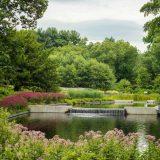 The Native Plant Garden in summer.