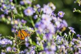 light purple flowers with butterfly